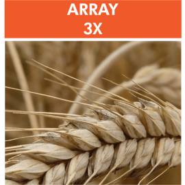 Array 3X – Wheat/Gluten Proteome Reactivity & Autoimmunity