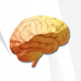 Vibrant America Neural Zoomer Plus