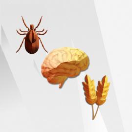 Vibrant Neural Health Combo Plus