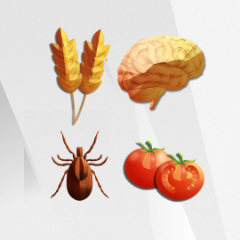 Vibrant Neural Health Combo Advanced